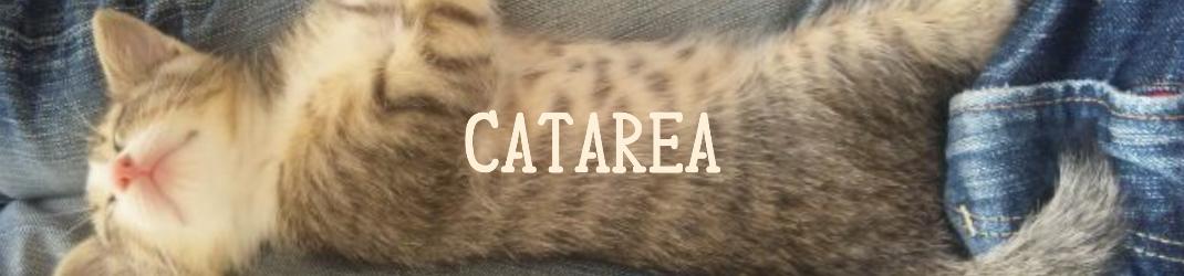 ~カタレア~ 猫と気持ちを通わせながら 幸せに生きていく