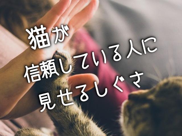 信頼関係にある人と猫