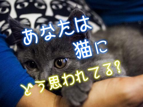 飼い主の腕に抱かれる猫