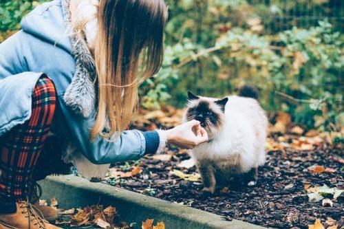 猫におやつをあげる女の人