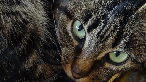 こちらをにらみつける猫