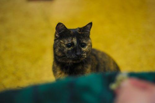 飼い主の気まぐれに戸惑う猫