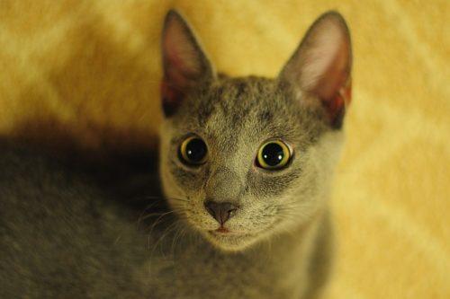 名前を呼ばれて驚く猫