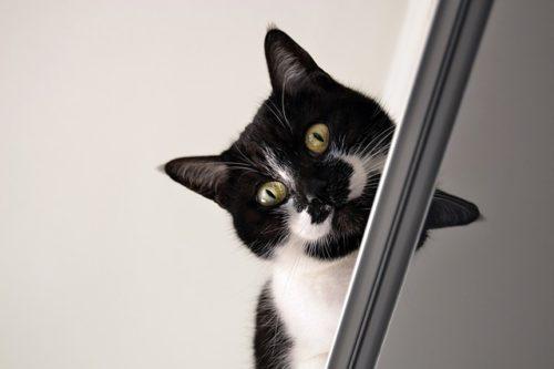 飼い主を見下ろす猫