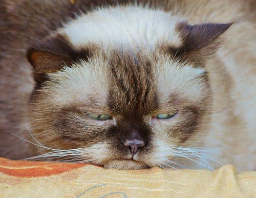 ふてくされながら目をそらす猫