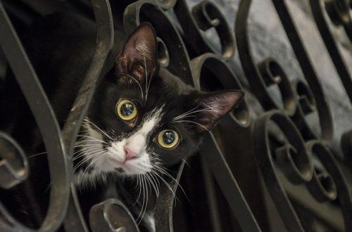 クリクリの目をした猫