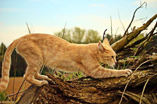 激しく爪をとぐ猫