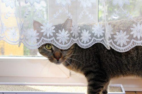 叱られてそっと逃げていった猫