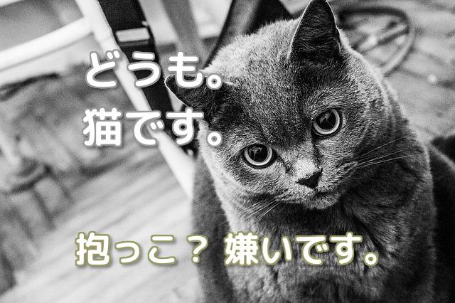 抱っこ嫌いな猫