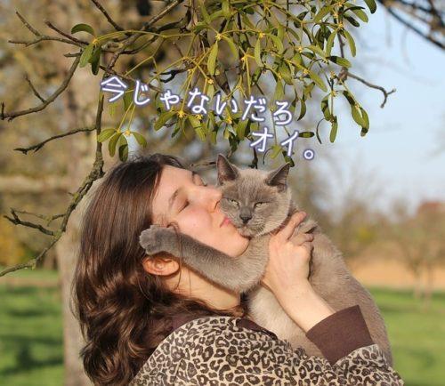 人に抱っこされて嫌がっている猫