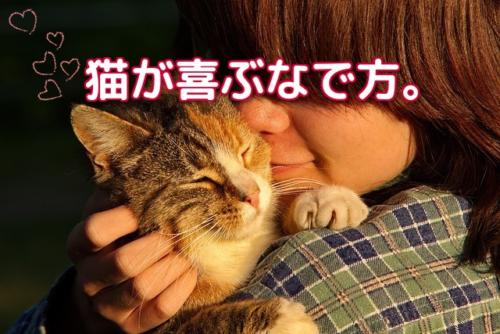 人に撫でられて気持ちよさそうに目を瞑る猫