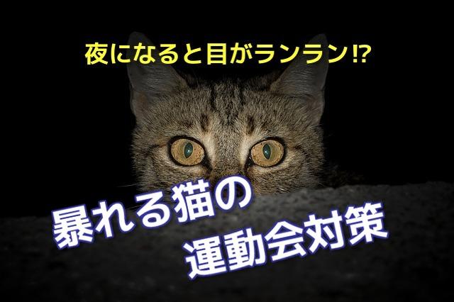 夜に暴れる猫