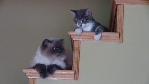 階段の上でくつろぐ猫