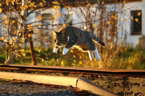 活動的に飛び跳ねる猫