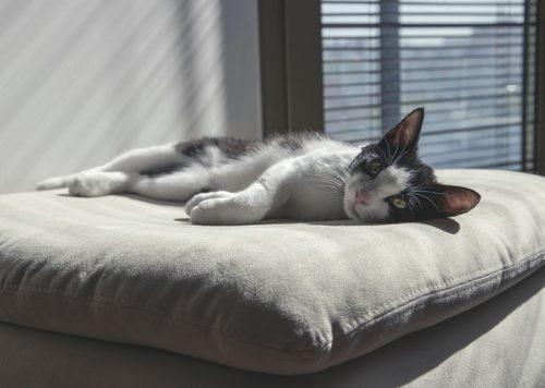 クッションの上に横たわってこちらを見つめている猫