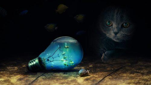 暗がりでじっとしている猫