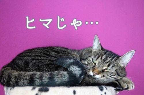 ヒマ過ぎてストレスを感じている猫