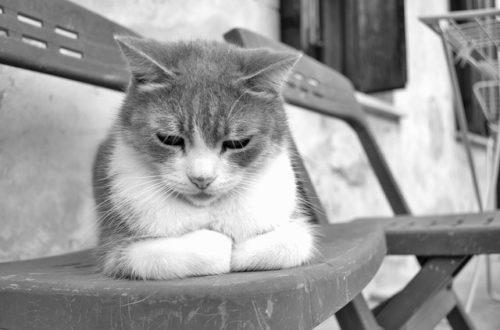 うつむいて元気がなさそうな猫