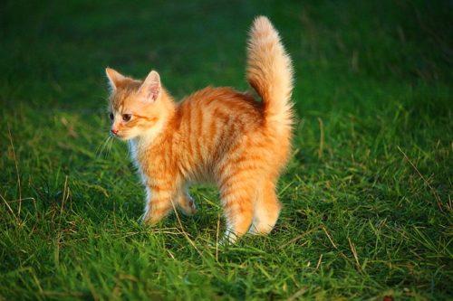 なにかに驚いてしっぽをボワッと膨らませた猫