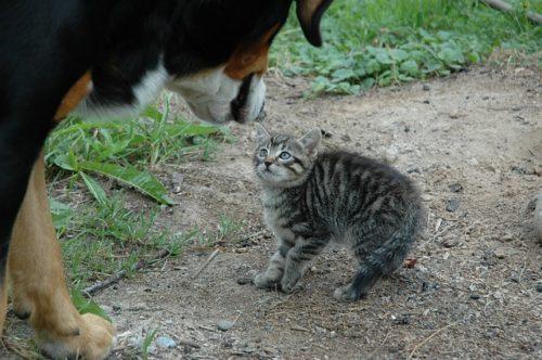 恐怖を感じてしっぽを足の間に巻き込んだ猫