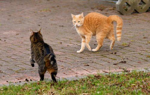 しっぽを山なりにして威嚇する猫