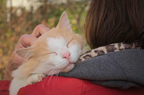 人に抱っこされて幸せそうな猫