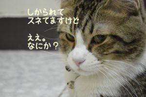 叱ったあとでスネている猫