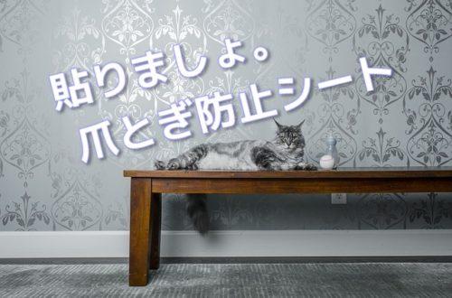 爪とぎ防止シートを貼った壁紙の前に横たわる猫