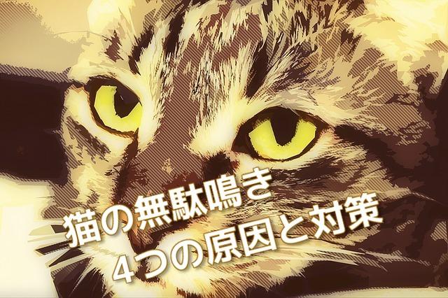 無駄鳴きする猫