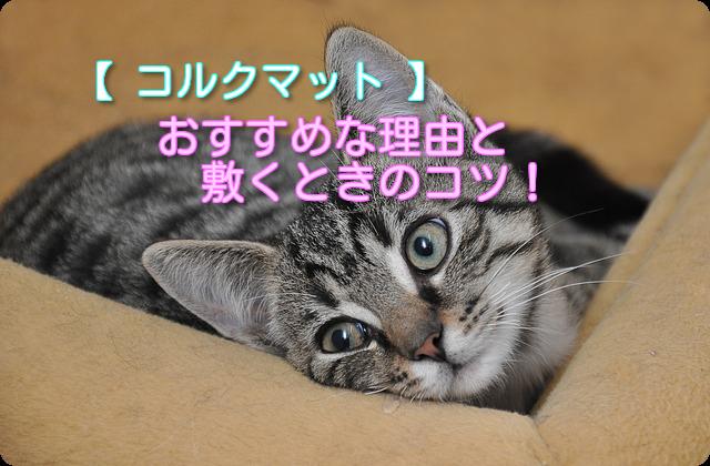 猫の爪とぎ対策(コルクマット)