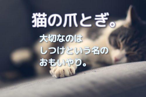 爪とぎしつけ中の猫