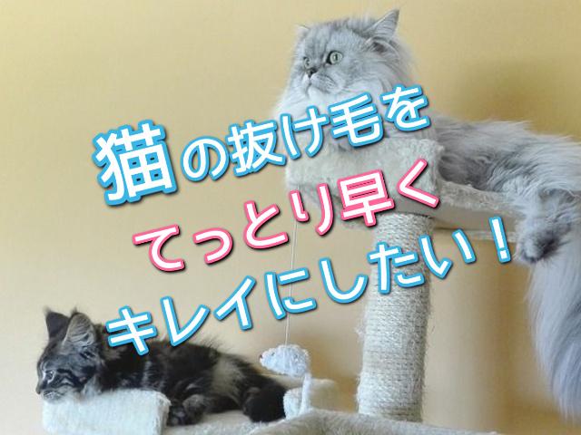 キャットタワーでくつろぐ長毛種の猫