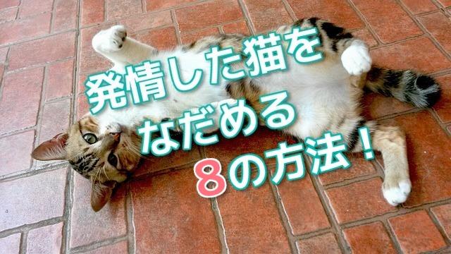 発情した猫