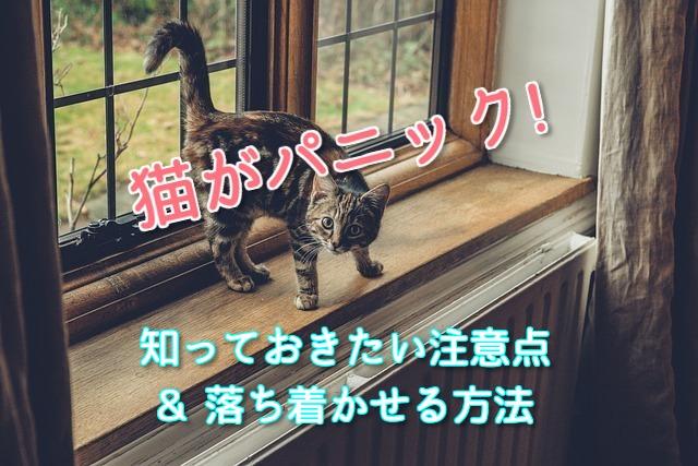 パニックを起こした猫を落ち着かせようとしている様子