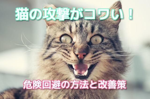 攻撃してくる猫