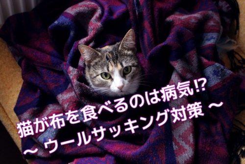布を食べる癖がある猫