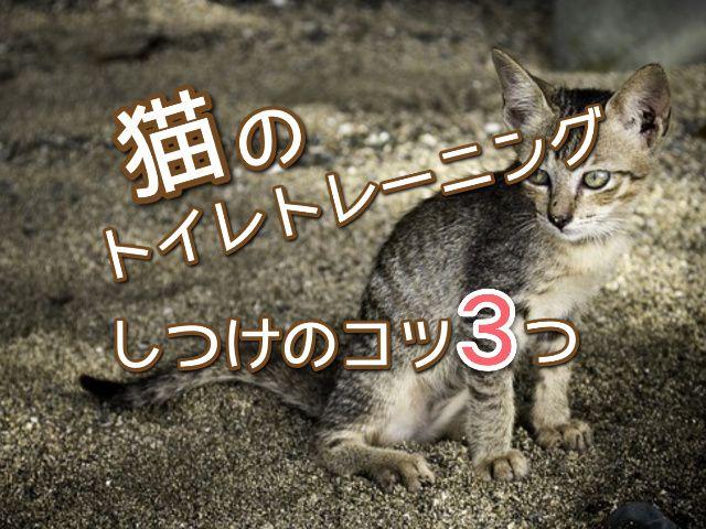 猫のトイレのしつけは最初が肝心知っておきたいコツ3つ