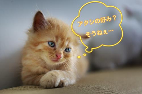 好みの水に思いを馳せる猫