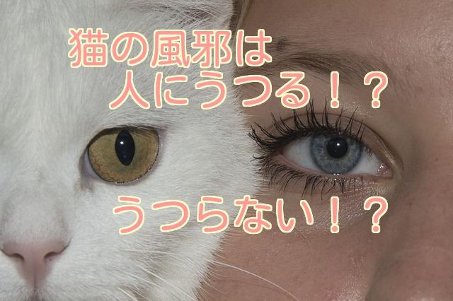 猫と人が顔を合わせた姿