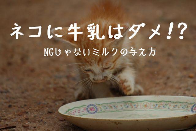 ネコが牛乳(ミルク) を飲んでいる画像